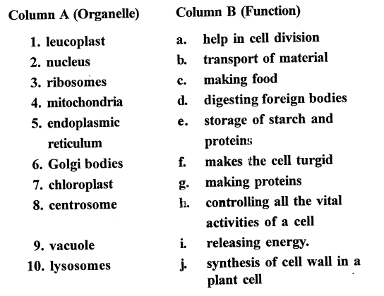 selina-concise-biology-class-6-icse- Cell - The Structure and Functions -0032