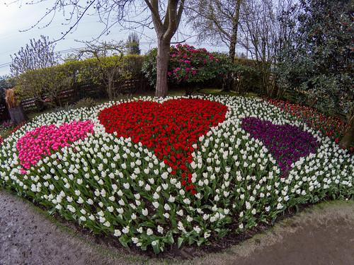 Roozengaarde Tulips-009