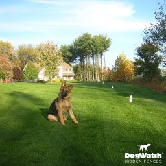 Invisible Fence Greensburg Pa 2007 Chevy Avalanche Parts Diagram Hidden Dog Customer Photo Gallery Dogwatch Of Southeast Indiana By Kriger