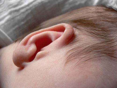oor madelief