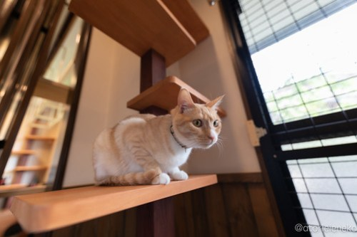 アトリエイエネコ Cat Photographer 27031165167_09335b7166 1日1猫!CaraCatCafe 6/9スマホ写真教室開催!久しぶりのつるるちゃん&ゲスト猫さん♪ 1日1猫!  里親様募集中 箕面 猫写真 猫カフェ 猫 子猫 大阪 写真 保護猫カフェ 保護猫 スマホ カメラ Kitten Cute cat caracatcafe