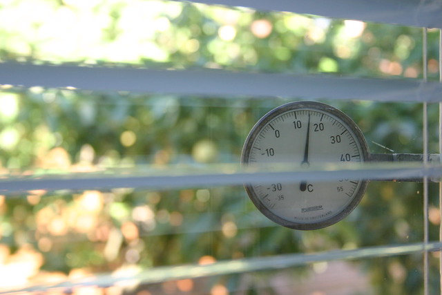 Thermometer and apple tree behind the kitchen window