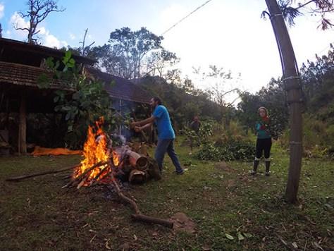 Carijo na floresta da Forqueta