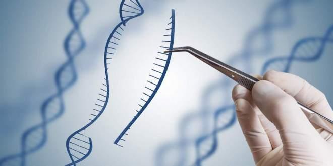 nouvelle-protéine-édition-cas12a