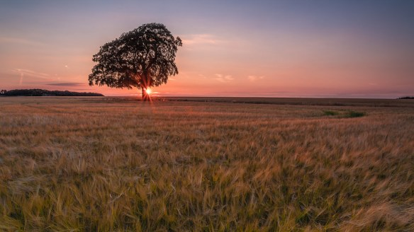 Lone Tree Sunset 2