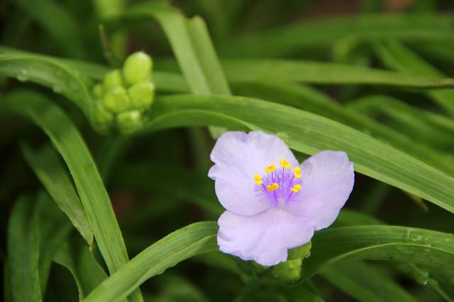 2018-05-20_Flowers_2