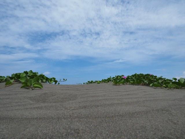 漁光島 (4)