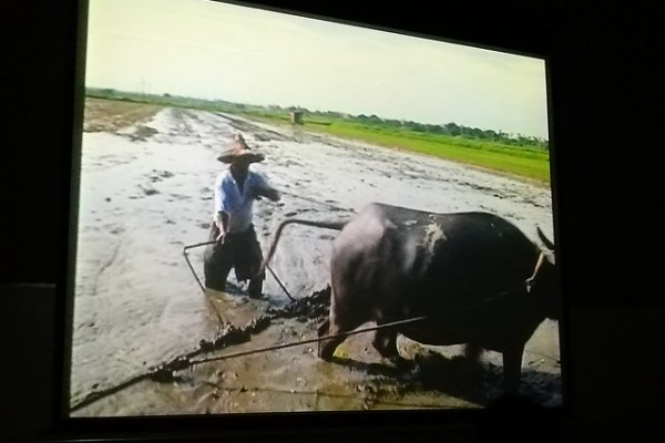 緘默的粒粒皆辛苦 「無米樂」與農民 (6)
