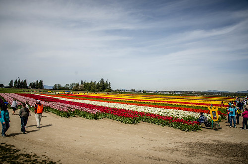 Skagit Valley Tulips-38