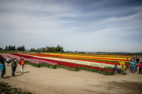 Skagit Valley Tulips-38