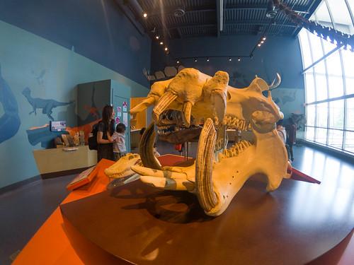 Telus World of Science Museum-037