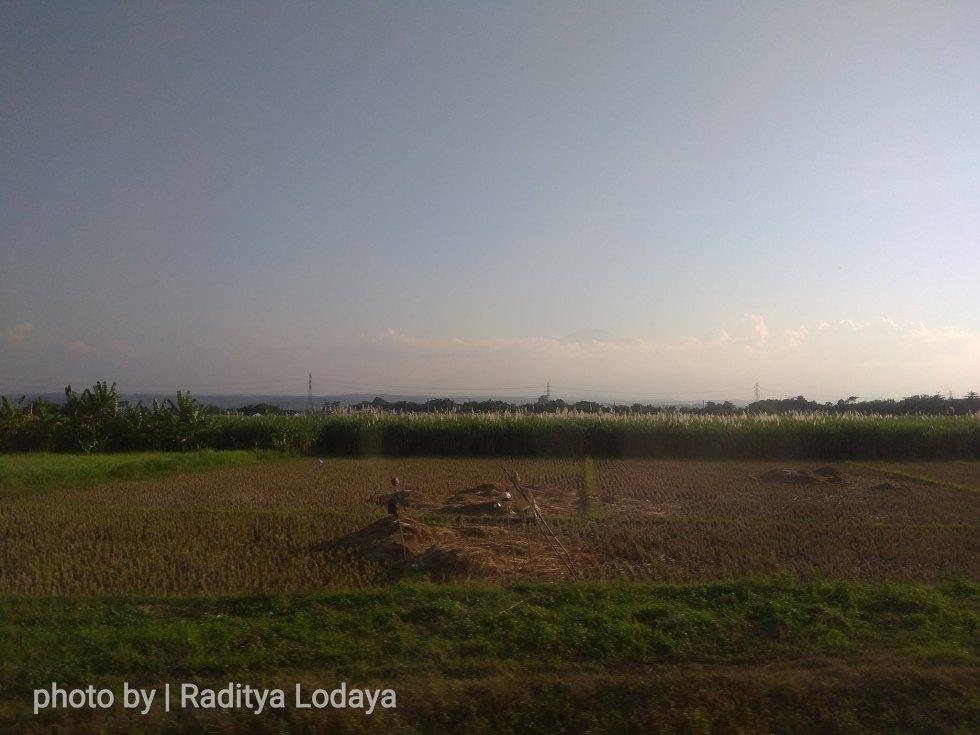 01 TRIP REPORT KERETA API JAYABAYA 2 (CIREBON TEGAL) - HAMPARAN SAWAH