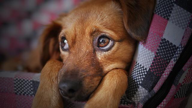 ブラッシングのしつけを嫌がる犬