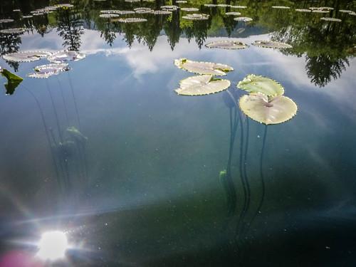 Lake Samish Paddling-68