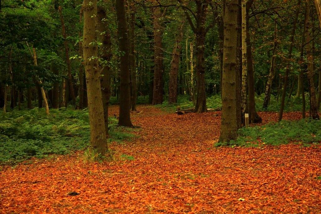 Zeeland autumn is very beautiful