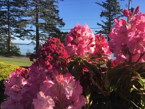 Samish Island Rhododendrons-009