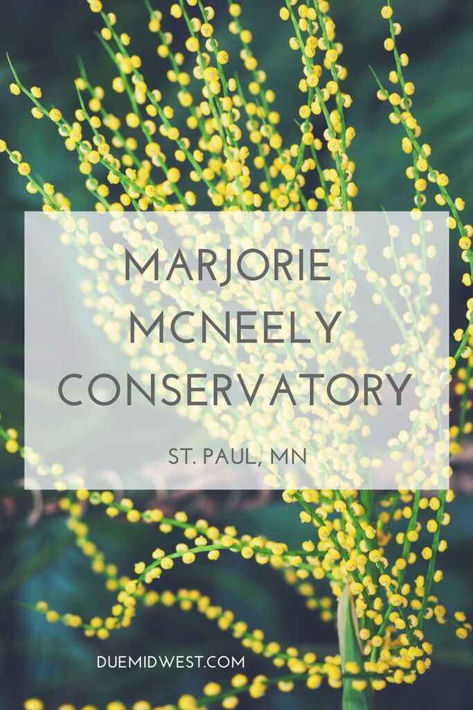 Marjorie McNeely Conservatory is a great place to visit in St. Paul, MN - DueMidwest.com