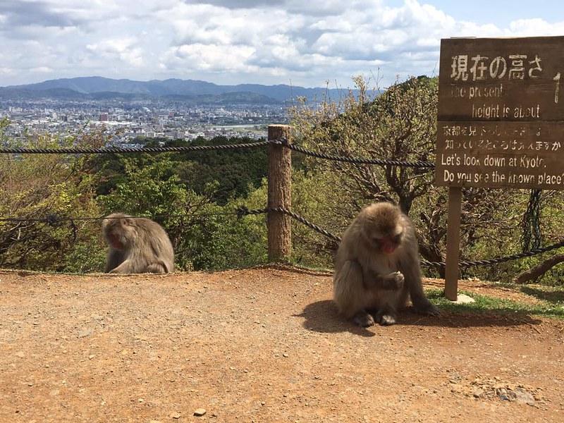monkeys in Kyoto