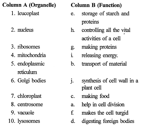 selina-concise-biology-class-6-icse- Cell - The Structure and Functions -0033