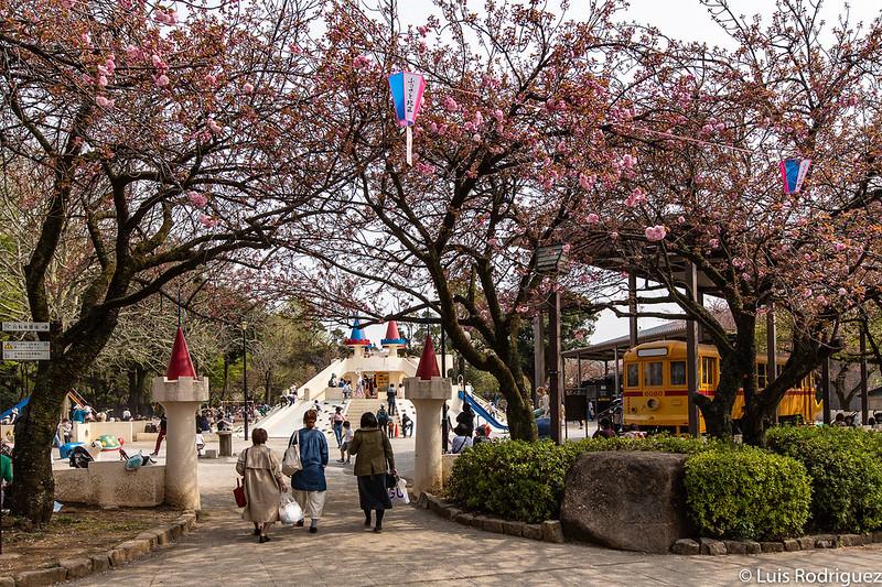Linea-Toden-Arakawa-Tokyo-Sakura-Tram-48