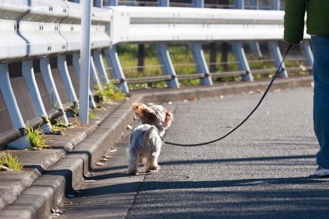リードをうまく使って散歩している犬