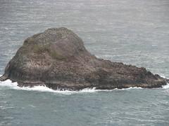 152 - Trinidad - Sea Lions - 20100526