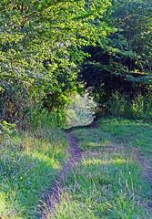 Bridle Path.