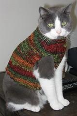Cat vest