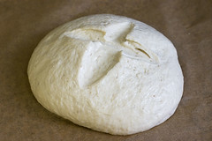 Risen Bread Dough
