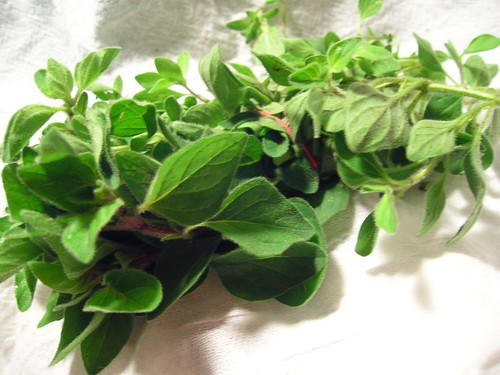Fresh Oregano and Marjoram