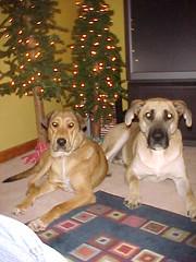 The Boys Under the Tree
