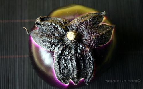 Eggplant - Melanzana - Aubergine