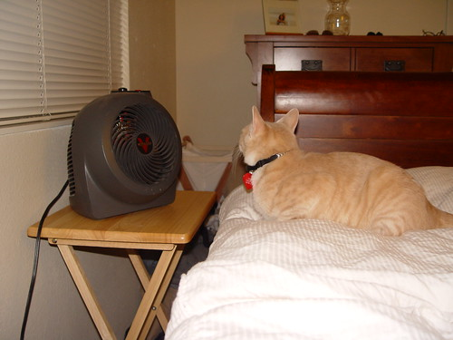 Nutmeg sitting in front of the fan.