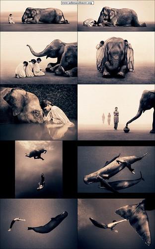www.ashesandsnow.org_elephant_sperm-whale