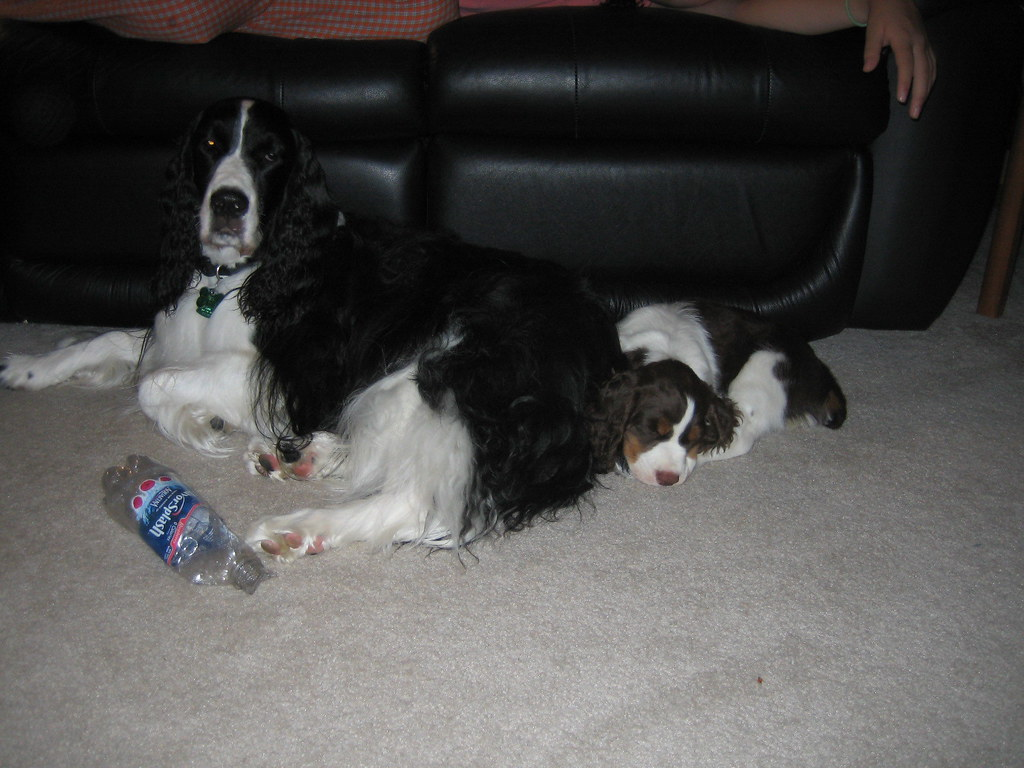 https://i0.wp.com/farm2.static.flickr.com/1016/1397590204_17196f1e8b_b.jpg