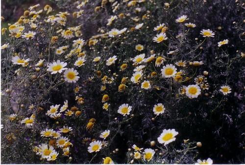 Flores en la Universidad