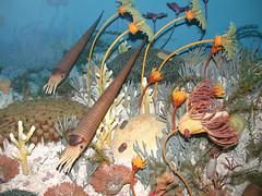 Silurian Reef diarama