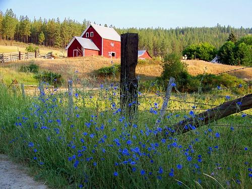 Pilgeram Ranch