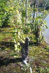 Beaver-pruned Tree
