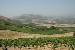 Sicily vineyard landscape view