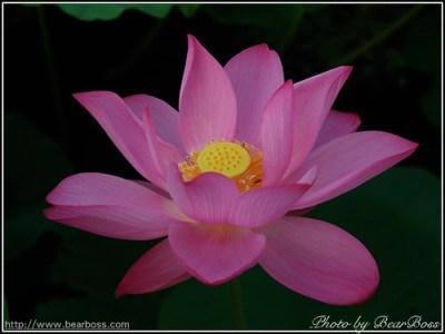 flower_09.jpg
