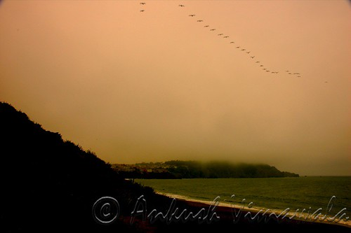 Flight of Dawn
