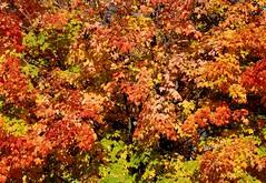 Autumn's Arrival