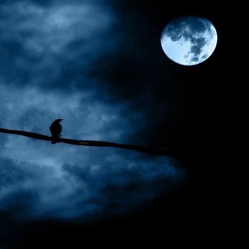 La nuit face au ciel (Julio Cortazar, recueil