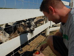 Feeding the farm animals