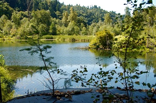 Cavanaugh Pond Natural Area