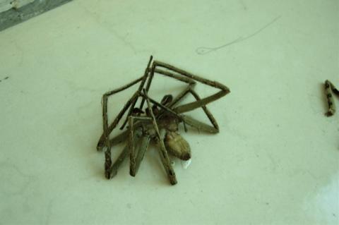 spiderthree.jpg