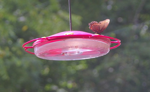 butterfly on hummingbird feeder