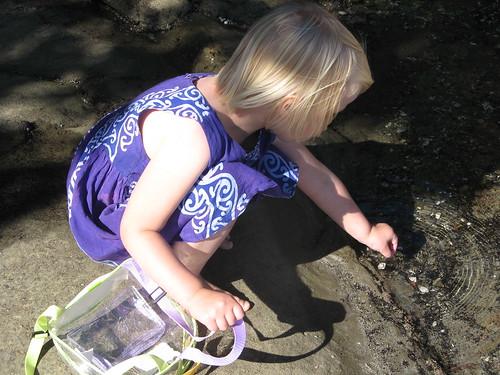 Washing a shell
