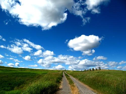 Roadway by Dru!